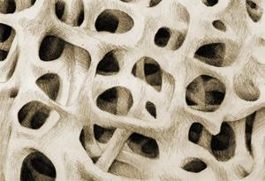 Gesunde Knochenstruktur